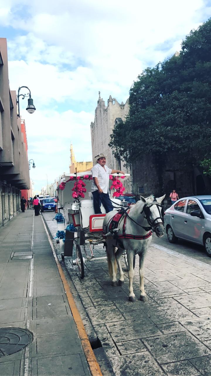 merida-reisen-reise-kutsche-mexico-diy-blog-madmoisell