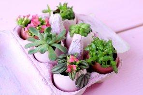DIY Oster Deko: Ostereier mit Sukkulenten bepflanzen